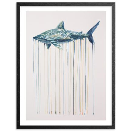 Kai'ili Kaulukukui Art - Oceanic Whitetip - Framed