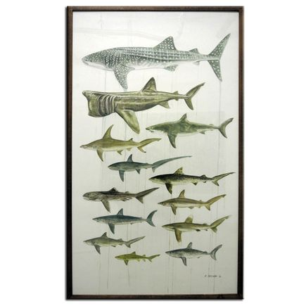 Martin Machado Original Art - A Selection of the World's Most Endangered Sharks
