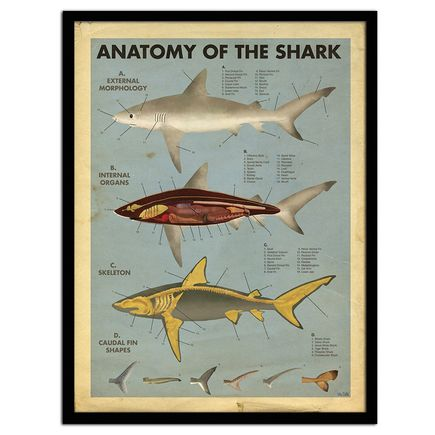 Max Dalton Art - Anatomy of the Shark